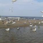 12 20150914_153504 Może Bałtyckie, Plaża w miejscowości Stegna