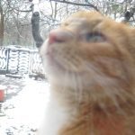 Obserwacje kota Filemona zimową porą''- Kamila Przyczynek, 15 lat Legionowo