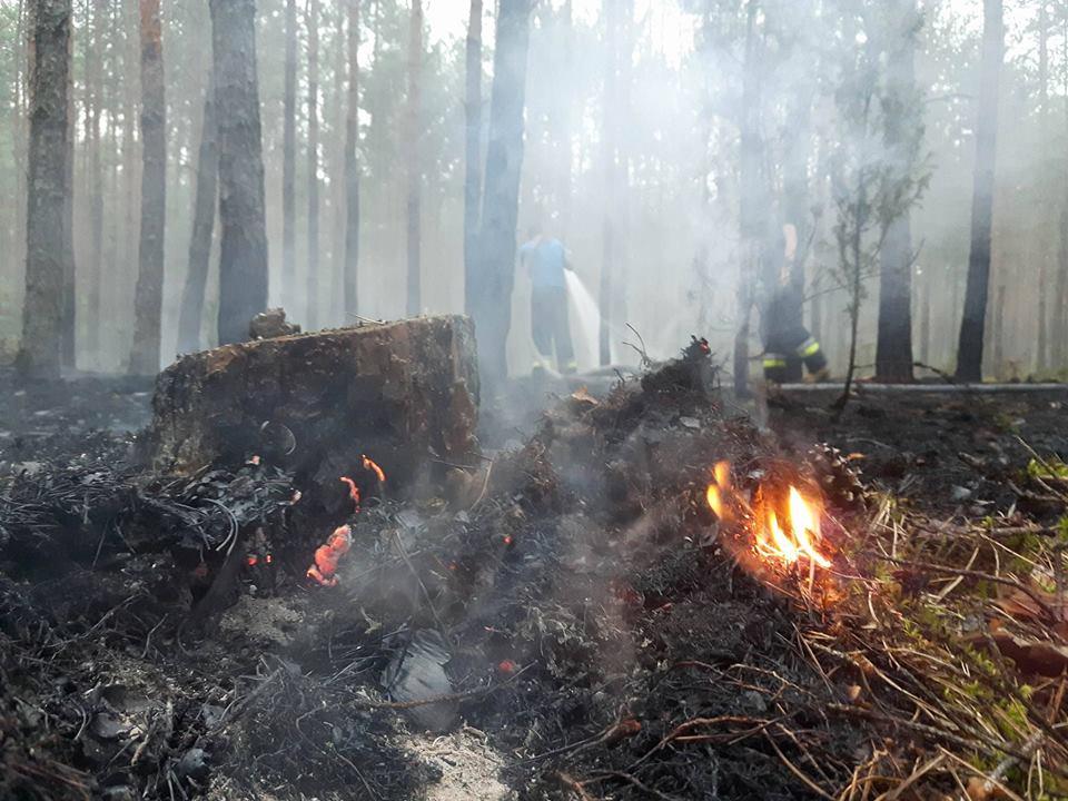 pożar lasu osp chot1